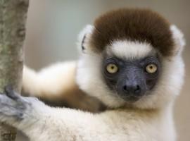 Momo-the-Monkey