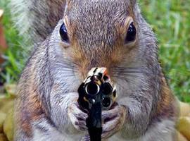 BarkingDeathSquirrel