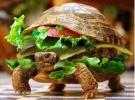 frozenburger