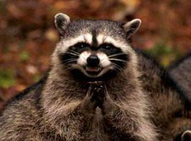 EvilRaccoon