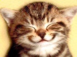 krool-kitty419