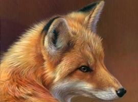 Alter-Fox