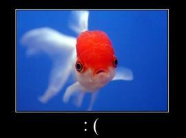 FishScratchFever