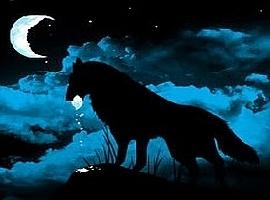Vagrant-Wolf