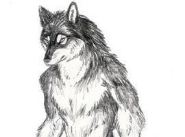 wolffangsage