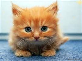 KittenBoy