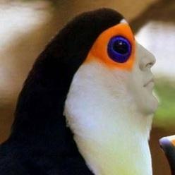 CheddarBird