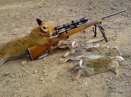 hunterofhunted