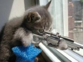 Killer-Cat