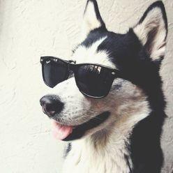 Crypticdog