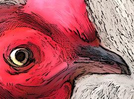 Battlecock