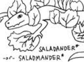 Saladmander