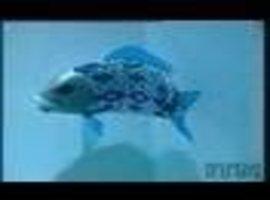 scooglefish