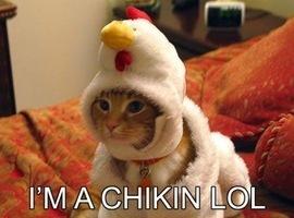 chickenpalooza