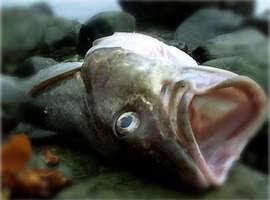 deadfishfaces