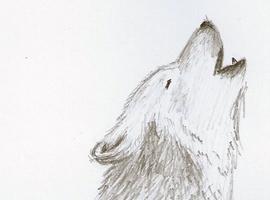 wolf0802