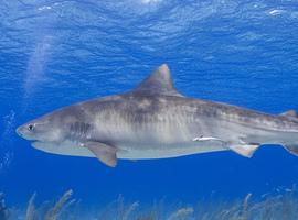 sharkbaitchris