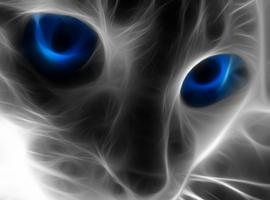 catpop99