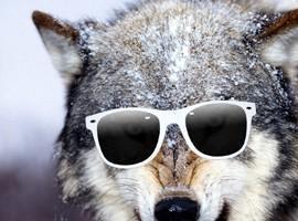 Hipsterwolf