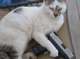 Catswithguns956