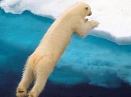 Polarbear226