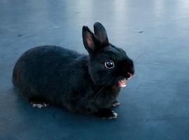 bunnyflop