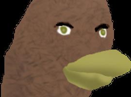 kahootbird