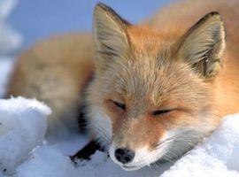 FoxShift