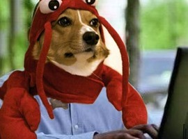 lobstersteve