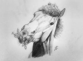 Pencil-Pony