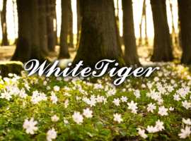 WhiteTigerOfficial